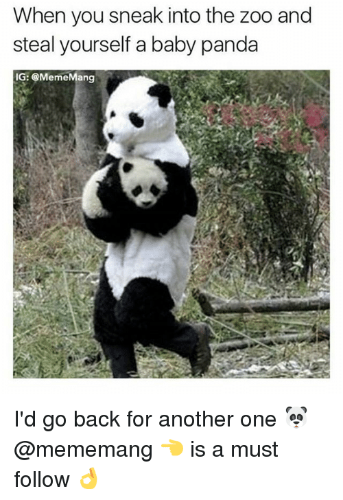 Another One, Memes, and Panda: When you sneak into the zoo and  steal yourself a baby panda  IG: @MemeMang I'd go back for another one 🐼 @mememang 👈 is a must follow 👌