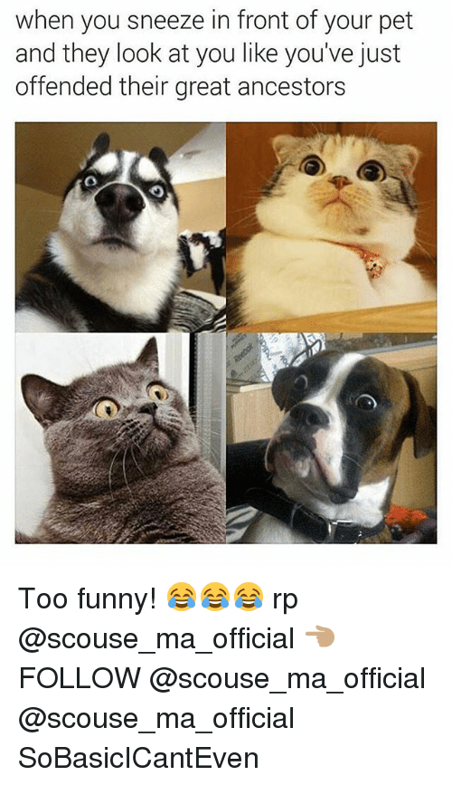 Funny, Memes, and 🤖: when you sneeze in front of your pet  and they look at you like you've just  offended their great ancestors Too funny! 😂😂😂 rp @scouse_ma_official 👈🏽 FOLLOW @scouse_ma_official @scouse_ma_official SoBasicICantEven
