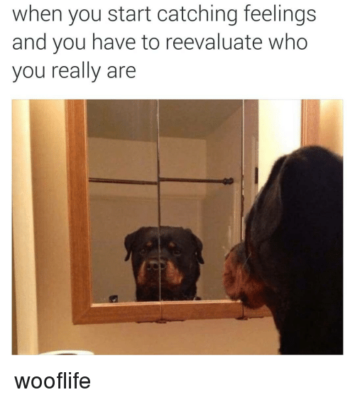 Catching Feelings: when you start catching feelings  and you have to reevaluate who  you really are wooflife
