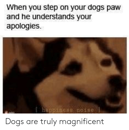 You Step: When you step on your dogs paw  and he understands your  apologies  happiness noise Dogs are truly magnificent