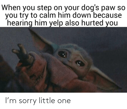M Sorry: When you step on your dog's paw so  you try to calm him down because  hearing him yelp also hurted you I'm sorry little one