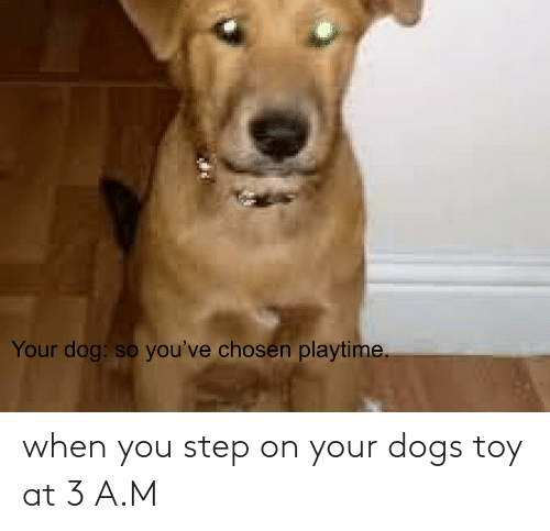 You Step: when you step on your dogs toy at 3 A.M