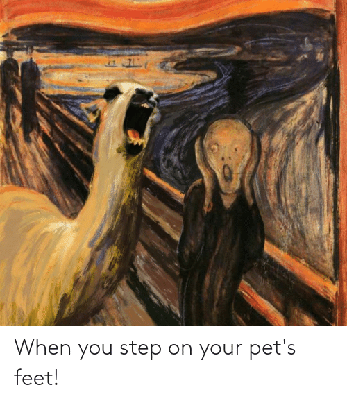 You Step: When you step on your pet's feet!