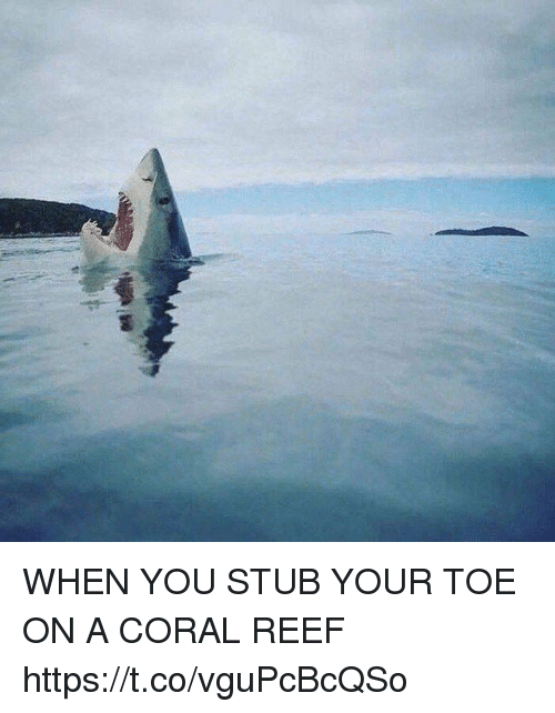 stub: WHEN YOU STUB YOUR TOE ON A CORAL REEF https://t.co/vguPcBcQSo