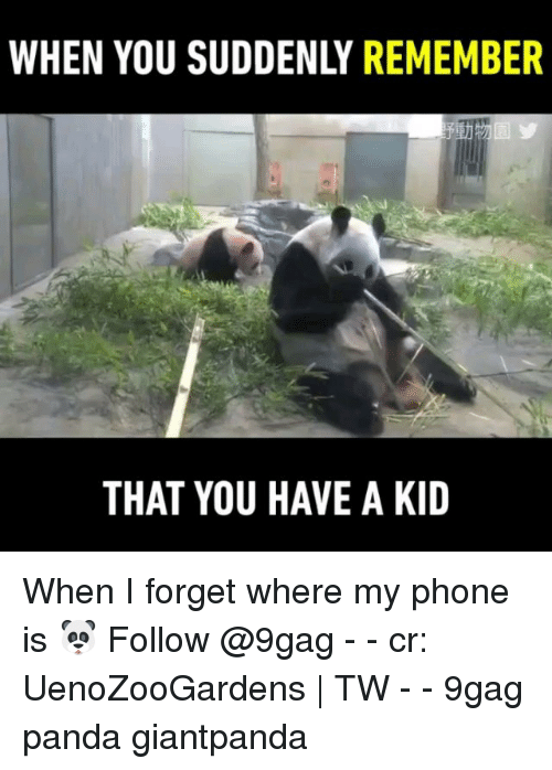 9gag, Memes, and Phone: WHEN YOU SUDDENLY REMEMBER  THAT YOU HAVE A KID When I forget where my phone is 🐼 Follow @9gag - - cr: UenoZooGardens | TW - - 9gag panda giantpanda