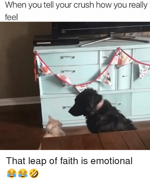 leap of faith: When you tell your crush how you really  feel That leap of faith is emotional 😂😂🤣