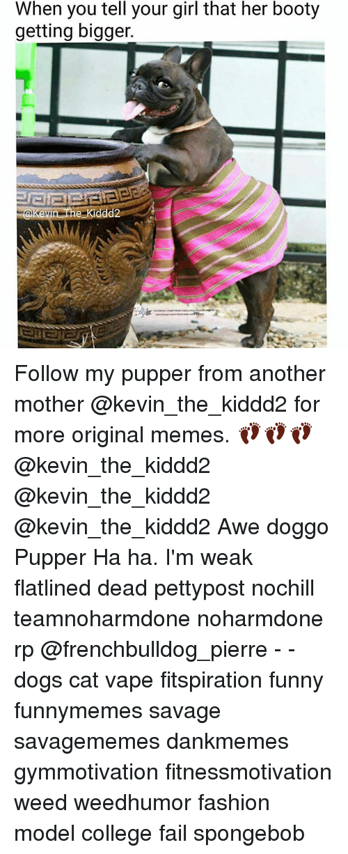 awe: When you tell your girl that her booty  getting bigger.  Kevin the Kiddd2 Follow my pupper from another mother @kevin_the_kiddd2 for more original memes. 👣👣👣 @kevin_the_kiddd2 @kevin_the_kiddd2 @kevin_the_kiddd2 Awe doggo Pupper Ha ha. I'm weak flatlined dead pettypost nochill teamnoharmdone noharmdone rp @frenchbulldog_pierre - - dogs cat vape fitspiration funny funnymemes savage savagememes dankmemes gymmotivation fitnessmotivation weed weedhumor fashion model college fail spongebob