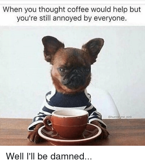 What Happens When You Give Your Dog Coffee