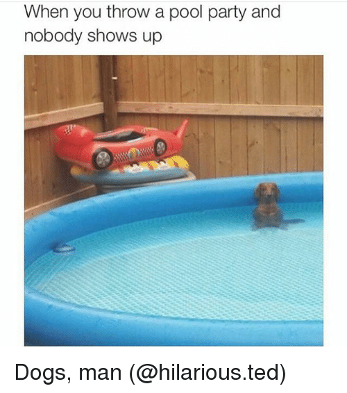 25 best memes about dog man dog man memes for Pool man show