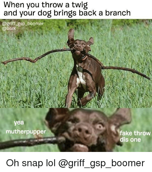 Fake, Lol, and Memes: When you throw a twig  and your dog brings back a branch  @griff gsp boomer  @bark  yea  mutherpupper  fake throw  dis one Oh snap lol @griff_gsp_boomer