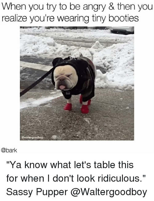 """Memes, Angry, and Sassy: When you try to be angry & then you  realize you're wearing tiny booties  @bark """"Ya know what let's table this for when I don't look ridiculous."""" Sassy Pupper @Waltergoodboy"""