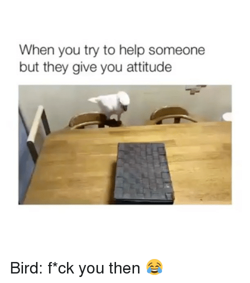 Funny, Help, and Attitude: When you try to help someone  but they give you attitude Bird: f*ck you then 😂