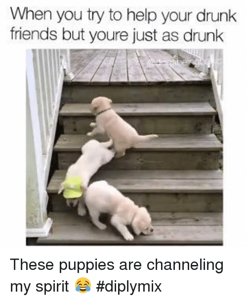 Memes, 🤖, and Channel: When you try to help your drunk  friends but youre just as drunk These puppies are channeling my spirit 😂 #diplymix