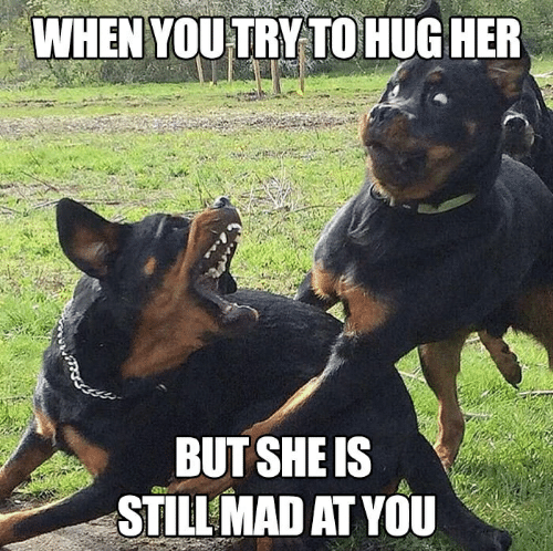 Still Mad At You: WHEN YOU TRY TO HUG HER  BUT SHE IS  STILL MAD AT YOU