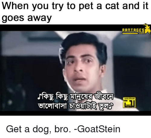 Cats, Dogs, and Memes: When you try to pet a cat and it  goes away  RRATAGES  com  匍 Get a dog, bro. -GoatStein