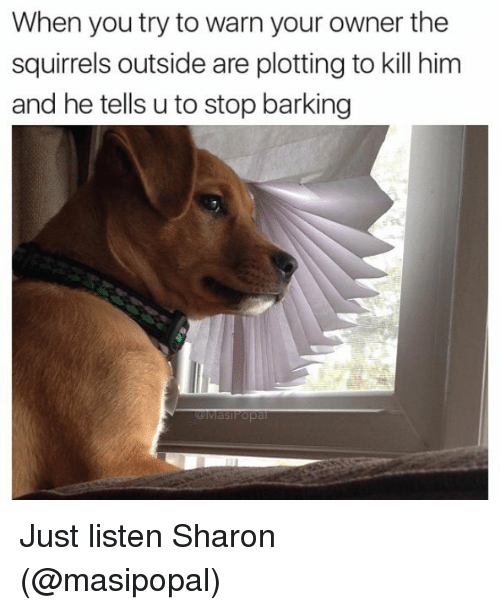 warne: When you try to warn your owner the  squirrels outside are plotting to kill him  and he tells uto stop barking Just listen Sharon (@masipopal)