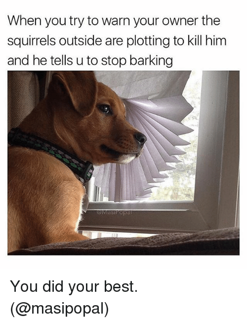 warne: When you try to warn your owner the  squirrels outside are plotting to kill him  and he tells u to stop barking You did your best. (@masipopal)