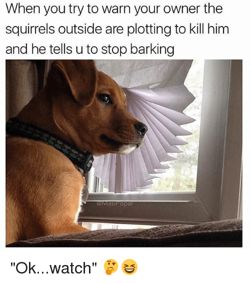 """warne: When you try to warn your owner the  squirrels outside are plotting to kill him  and he tells u to stop barking  Mas Popa """"Ok...watch"""" 🤔😆"""