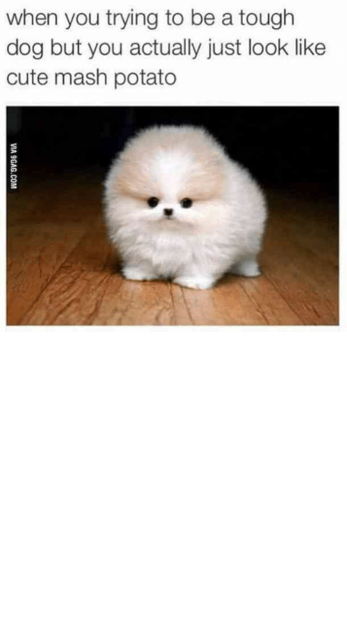 Silly Quotes: when you trying to be a tough  dog but you actually just look like  cute mash potato  VIA 9GAG.COM National Dog Day is August 24, and there's no better way to celebrate man's best friend than with these cute, relatable and funny dog memes and silly quotes about dogs.  #relatable #dogs #memes #nationaldogday