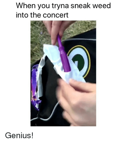Weed, Genius, and Marijuana: When you tryna sneak weed  into the concert Genius!