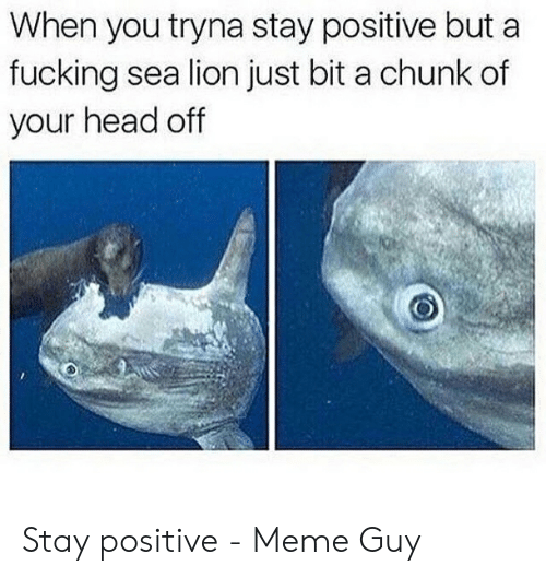 Be Positive Meme: When you tryna stay positive but a  fucking sea lion just bit a chunk of  your head off Stay positive - Meme Guy