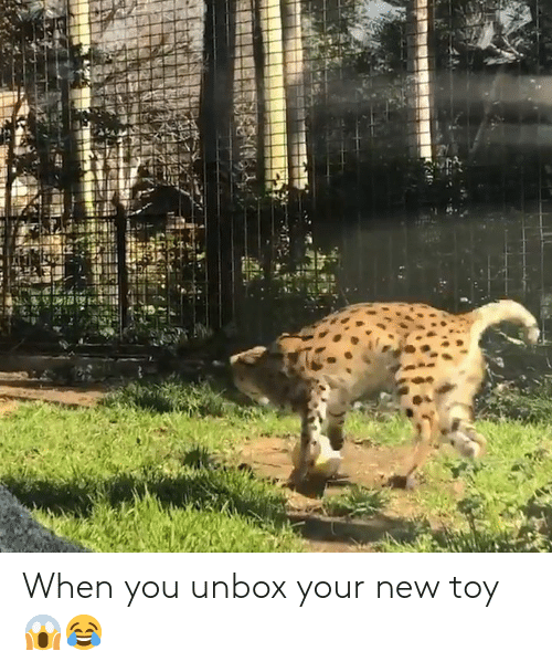 new toy: When you unbox your new toy 😱😂