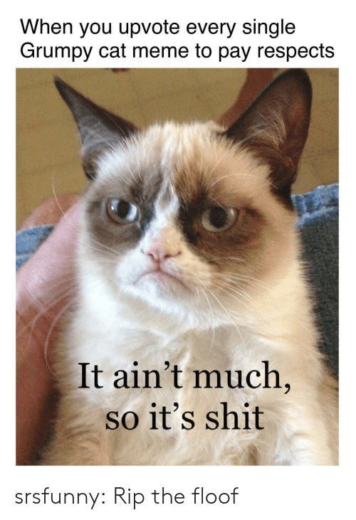 Grumpy Cat: When you upvote every single  Grumpy cat meme to pay respects  It ain't much  so it's shit srsfunny:  Rip the floof