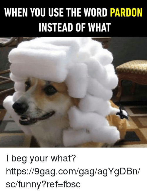 9gag, Dank, and Funny: WHEN YOU USE THE WORD PARDON  INSTEAD OF WHAT I beg your what? https://9gag.com/gag/agYgDBn/sc/funny?ref=fbsc
