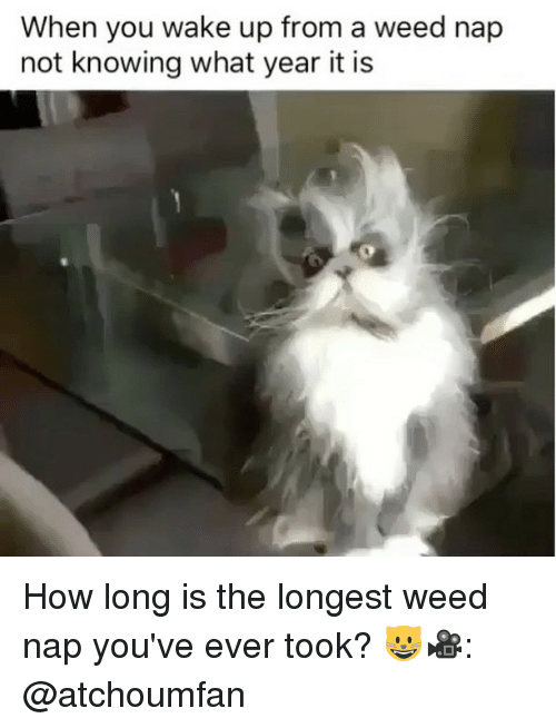 Weed, Marijuana, and How: When you wake up from a weed nap  not knowing what year it is How long is the longest weed nap you've ever took? 😺🎥: @atchoumfan