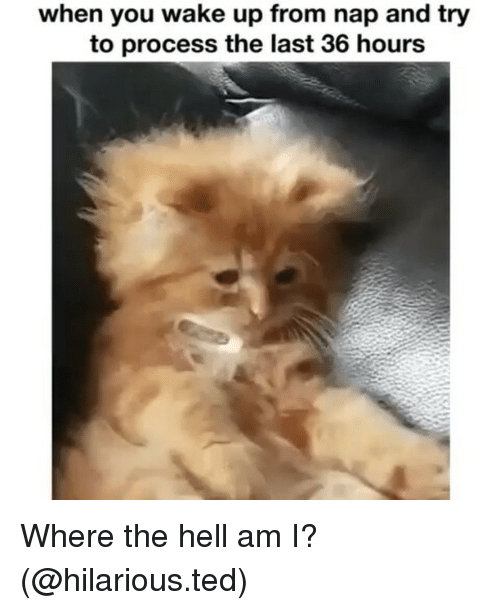 Funny, Ted, and Hilarious: when you wake up from nap and try  to process the last 36 hours Where the hell am I? (@hilarious.ted)