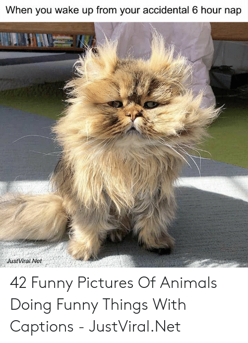 Accidental: When you wake up from your accidental 6 hour nap  JustViral Net 42 Funny Pictures Of Animals Doing Funny Things With Captions - JustViral.Net