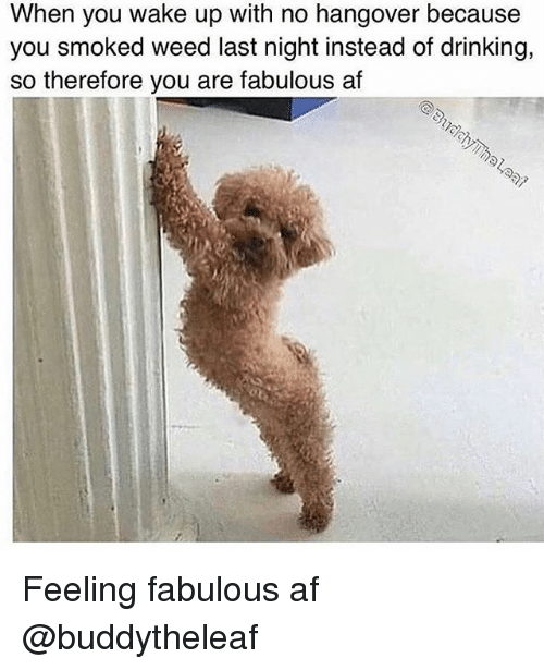 Af, Drinking, and Weed: When you wake up with no hangover because  you smoked weed last night instead of drinking,  so therefore you are fabulous af Feeling fabulous af @buddytheleaf