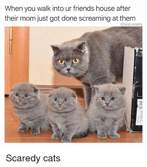 Cats, Friends, and Memes: When you walk into ur friends house after  their mom just got done screaming at them  @tank.sinatra Scaredy cats