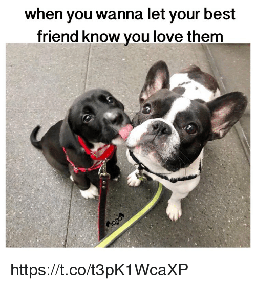 Best Friend, Love, and Memes: when you wanna let your best  friend know you love them https://t.co/t3pK1WcaXP