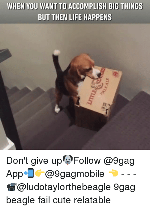 Memes, 🤖, and App: WHEN YOU WANT TO ACCOMPLISH BIG THINGS  BUT THEN LIFE HAPPENS Don't give up🐶Follow @9gag App📲👉@9gagmobile 👈 - - - 📹@ludotaylorthebeagle 9gag beagle fail cute relatable