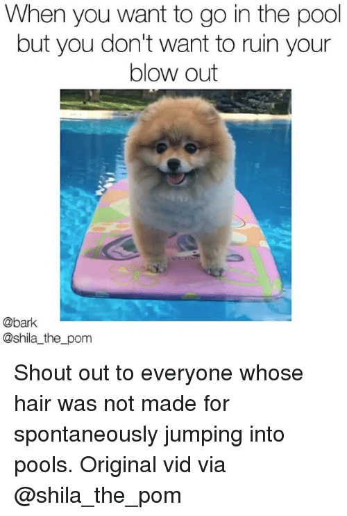 Memes, Hair, and Pool: When you want to go in the pool  but you don't want to ruin your  blow out  @bark  @shila_the_pom Shout out to everyone whose hair was not made for spontaneously jumping into pools. Original vid via @shila_the_pom