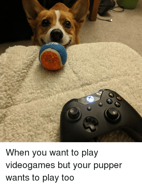 Play, You, and Videogames: When you want to play videogames but your pupper wants to play too