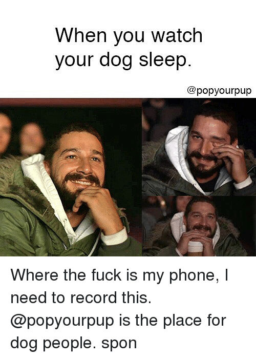 Funny, Phone, and Fuck: When you watch  your dog sleep  @popyourpup Where the fuck is my phone, I need to record this. @popyourpup is the place for dog people. spon