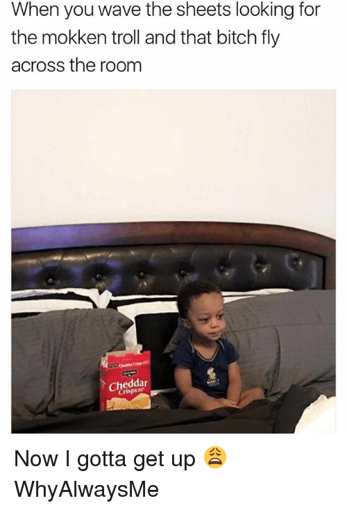 Bitch, Memes, and Troll: When you wave the sheets looking for  the mokken troll and that bitch fly  across the room  cheddar Now I gotta get up 😩 WhyAlwaysMe