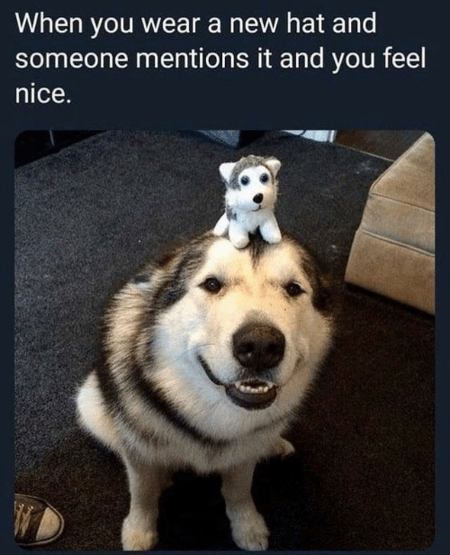 Feels Nice: When you wear a new hat and  someone mentions it and you feel  nice.