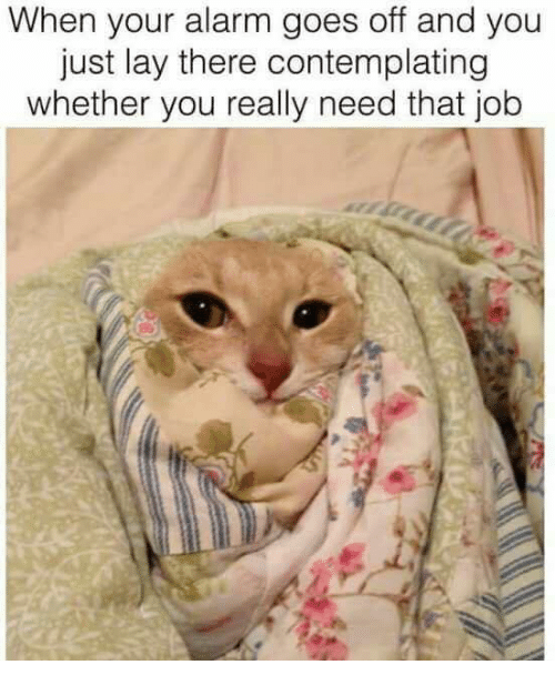 Lay's, Memes, and Alarm: When your alarm goes off and you  just lay there contemplating  whether you really need that job