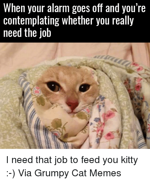Grumpy Cats: When your alarm goes off and you're  Contemplating Whether you really  need the Job I need that job to feed you kitty :-) Via Grumpy Cat Memes