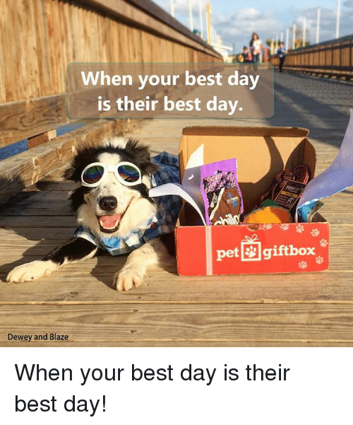 Boxing, Dewey, and Memes: When your best day  is their best day.  pet gift box  Dewey and Blaze When your best day is their best day!