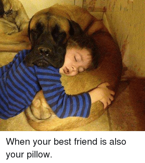 When Your Best Friend: When your best friend is also your pillow.