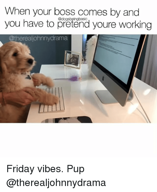 Friday, Memes, and Pup: When your boss comes by and  you have to pretend youre working  @dogsbeingbasic  @therealiohnnydrama Friday vibes. Pup @therealjohnnydrama