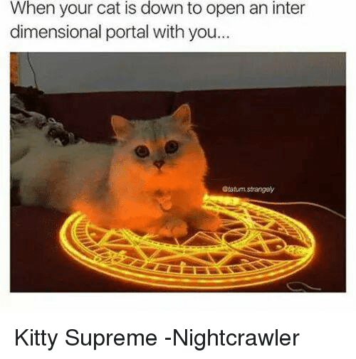 Kitties, Supreme, and Avengers: When your cat is down to open an inter  dimensional portal with you...  Gtatum strangely Kitty Supreme -Nightcrawler
