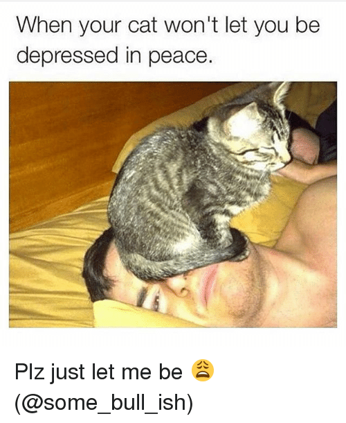 Memes, Peace, and 🤖: When your cat won't let you be  depressed in peace. Plz just let me be 😩(@some_bull_ish)