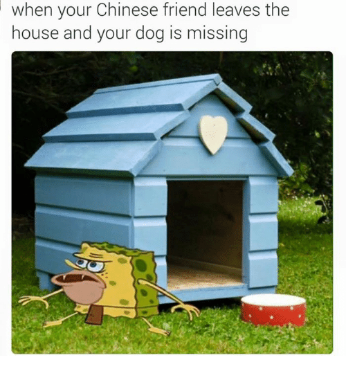 Friend Leaving: when your Chinese friend leaves the  house and your dog is missing