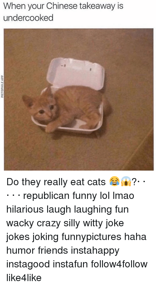 Republican Funny: When your Chinese takeaway is  undercooked Do they really eat cats 😂😱?· · · · · republican funny lol lmao hilarious laugh laughing fun wacky crazy silly witty joke jokes joking funnypictures haha humor friends instahappy instagood instafun follow4follow like4like