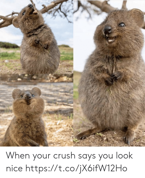 Says You: When your crush says you look nice https://t.co/jX6ifW12Ho